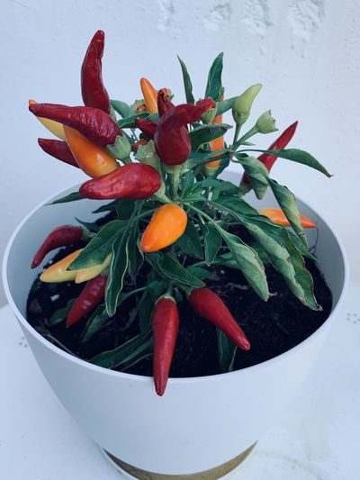 High angle view of red chili peppers in bowl