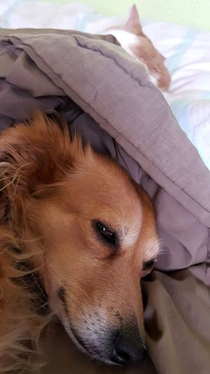 Animal Body Part Animal Themes AntiM Cat And Dog Cat And Dog Sleeping Cat In Bed Close-up Day Dog Dog In Bed Domestic Animals Eddie Tor Indoors  Looking At Camera Mammal No People One Animal Pet Clothing Pets Portrait SweetSally Pet Portraits