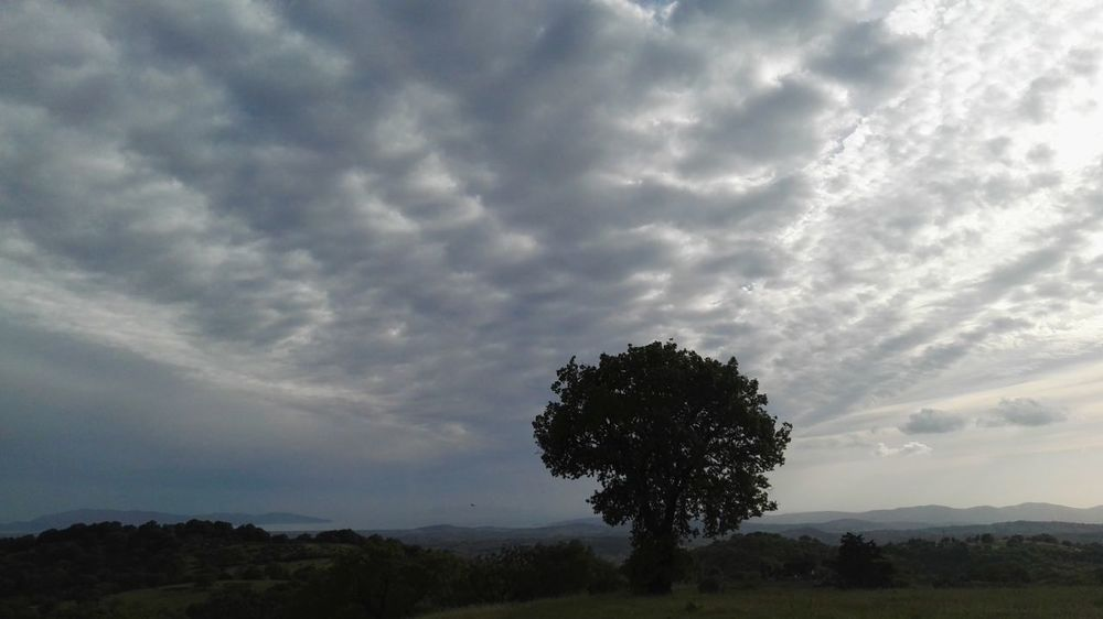 Tree Single Tree Beauty In Nature Cloud - Sky Nature Landscape Shadow No People Outdoors Scenics Sky Peace And Quiet Suggestive Place