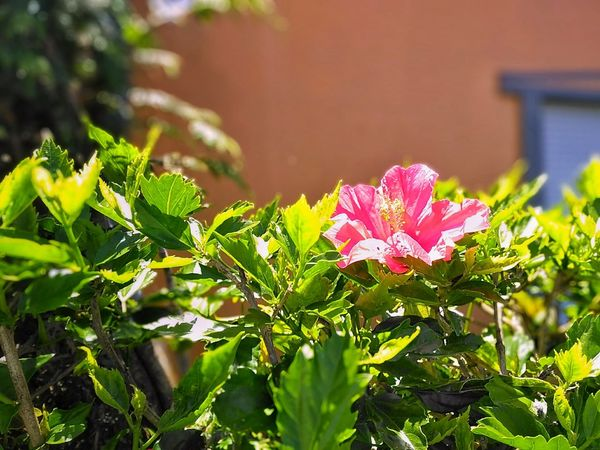 Flower Plant Leaf Nature Outdoors No People Green Color Day Beauty In Nature Sunlight Growth Summer Close-up Freshness Flower Head Fragility Vodafone Smart Ultra 6 Açores - São Miguel Desfocus