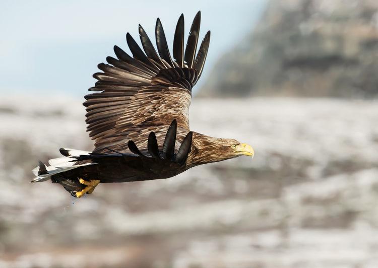 Bird flying outdoors