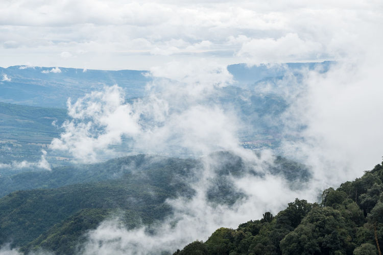 Mostly cloudy is covering the high mountain in the early morning of Thai national park. Fog Above Landscape Nature Mountain Morining Top View Mist Park Forest Sky Tree Cloud - Sky Plant Hill Peak Tropical Climate Covering Puffy Clouds Light Freshness Valley Cool Air