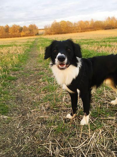 Walkies Summer Pets Domestic Domestic Animals One Animal Mammal Animal Themes Canine Dog Field Land Nature Day Animal Grass