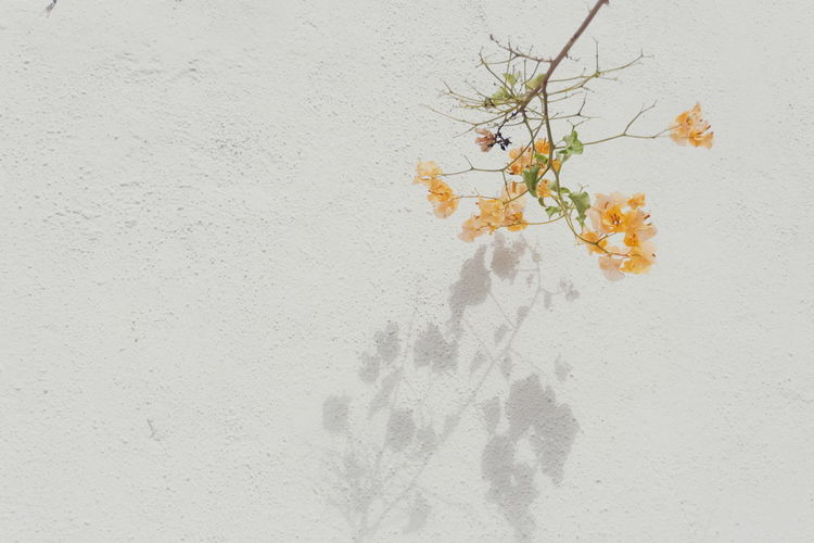 Close-up of white flowering plant against wall