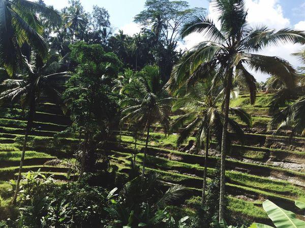 Travel Photography at Tegalalang Rice Terraces Bali, Indonesia