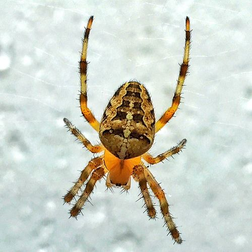 The face... Check This Out Spider Webstagram EyeEm Best Shots EyeEm Nature Lover Eye4photography  Summer
