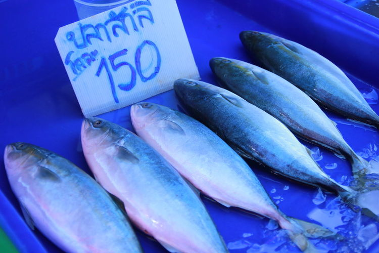 Food And Drink Freshness Food Fish Retail  Healthy Eating Wellbeing Close-up Market No People Vertebrate High Angle View Blue For Sale Seafood Animal Raw Food Large Group Of Objects Indoors  Still Life