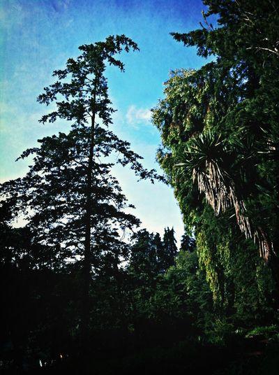 Bluesky EyeEm Nature Lover TreePorn Love