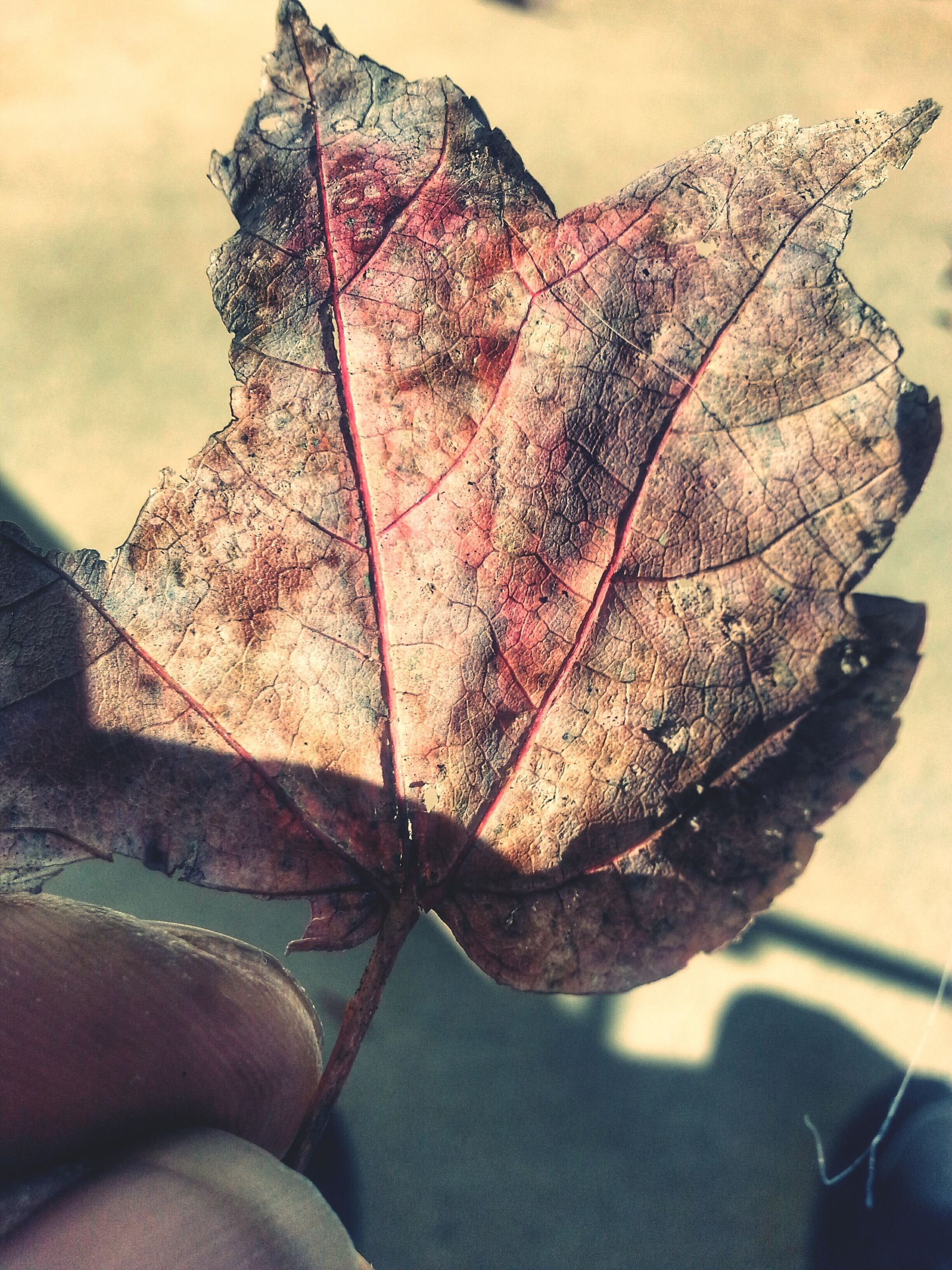 close-up, dry, focus on foreground, leaf vein, nature, natural pattern, leaf, sky, outdoors, dead plant, day, tranquility, part of, beauty in nature, sunlight, no people, fragility, autumn, branch, brown