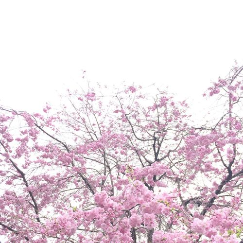Sakura EyeEm