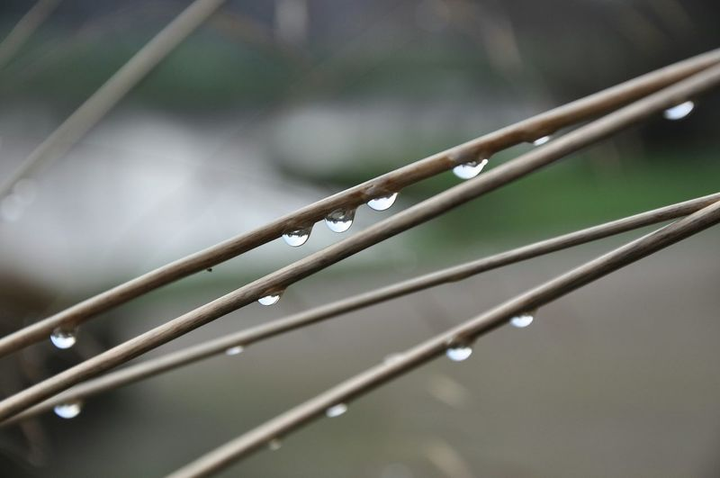 Close-up of raindrops on stems