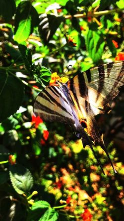 Animal Wildlife One Animal Animals In The Wild Animal Themes Animal Insect Plant Invertebrate Plant Part Beauty In Nature Day Focus On Foreground Nature Animal Wing Leaf No People Butterfly - Insect Close-up Green Color Growth
