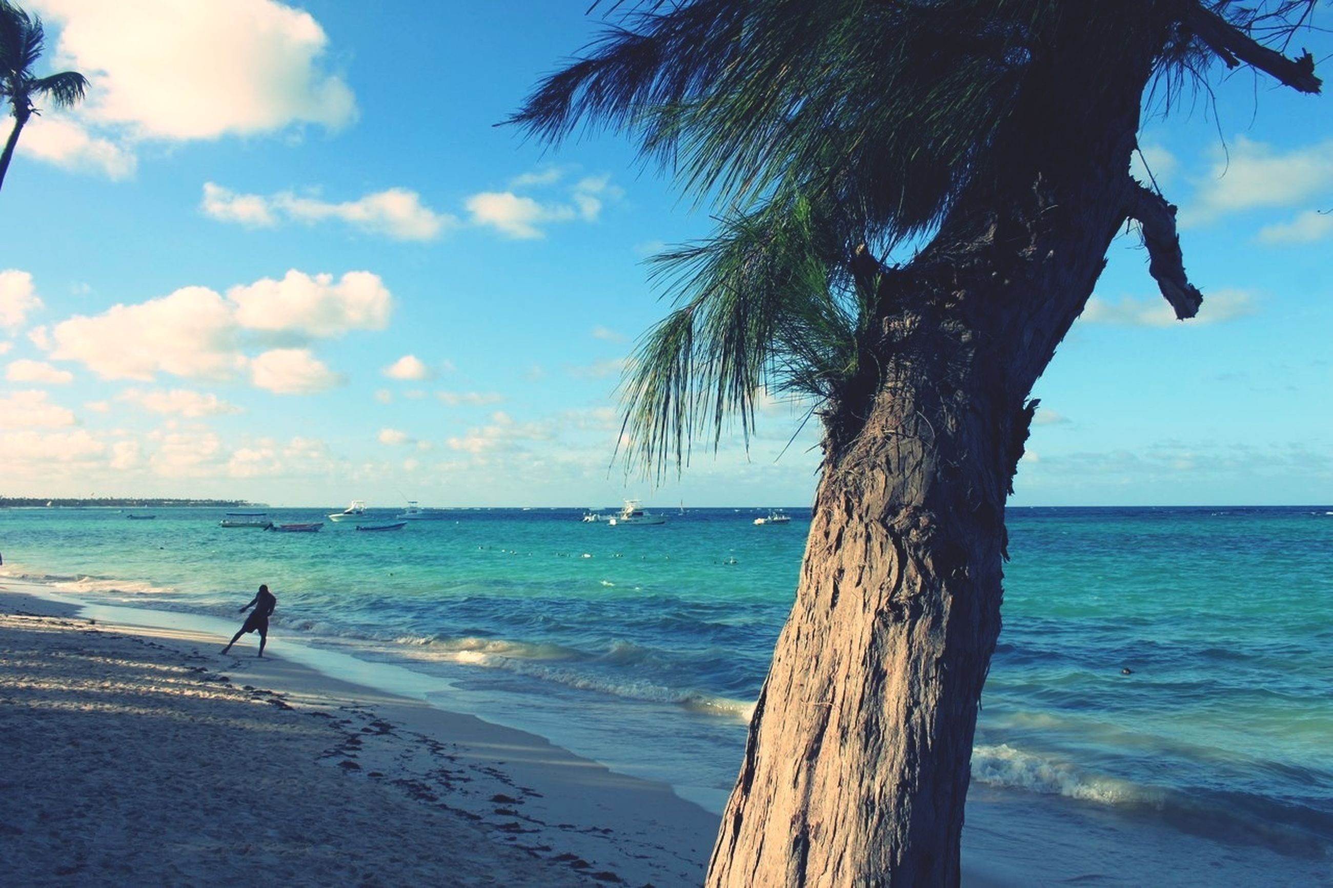 sea, horizon over water, sky, water, beach, tranquility, shore, tree, tranquil scene, scenics, tree trunk, beauty in nature, blue, cloud, nature, cloud - sky, palm tree, idyllic, sand, sunlight