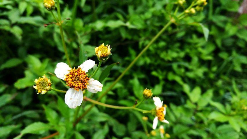 Flower Plant Nature Flower Head Focus On Foreground Fragility Outdoors Sunflower Pollen Nature Smart Phone Petal