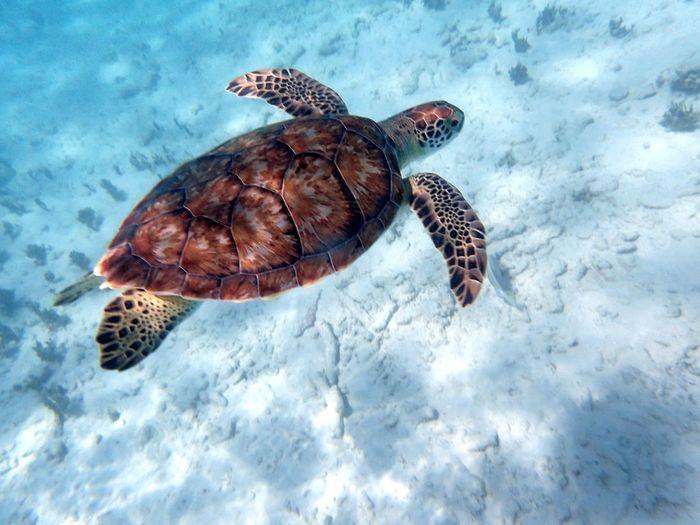 view of turtle swimming underwater
