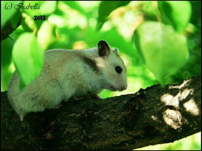 микки хомяк хомячиха серая светлая дерево листва зелень  EyeEmRussianTeam
