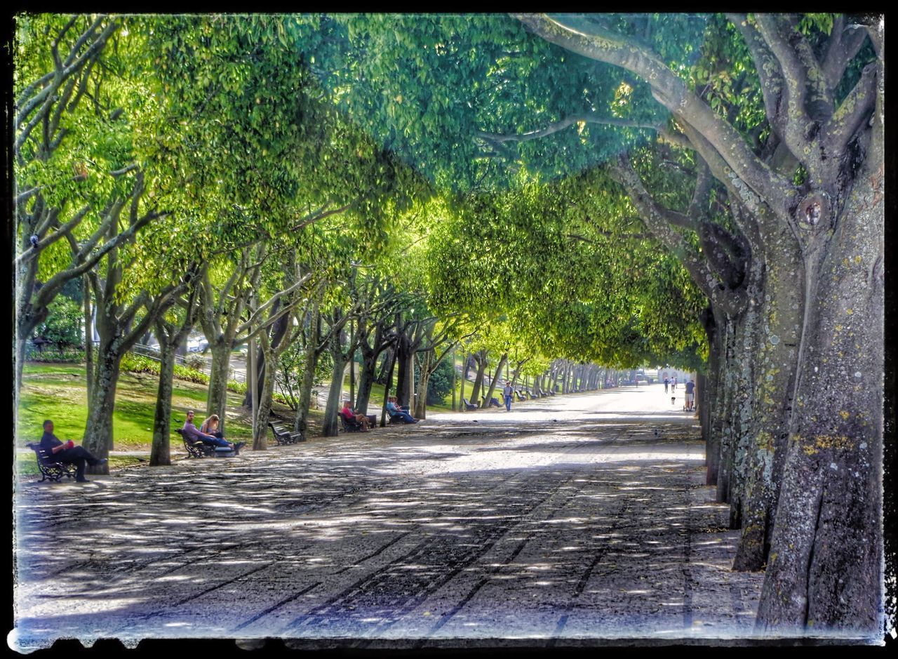 ROAD BY TREES IN PARK