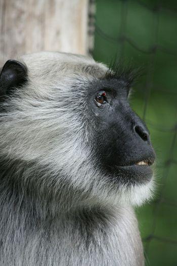 Monkey Monkeys Monkey Face Monky Nature_collection Naturelovers Natute