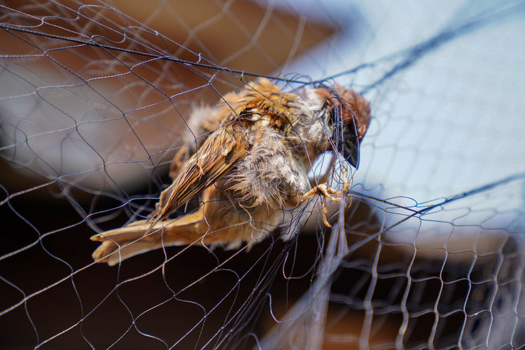 Animal Themes Animal Invertebrate Close-up One Animal Animal Wildlife Animals In The Wild Insect No People Focus On Foreground Arachnid Arthropod Spider Day Selective Focus Nature Zoology Trapped Pattern Outdoors Net