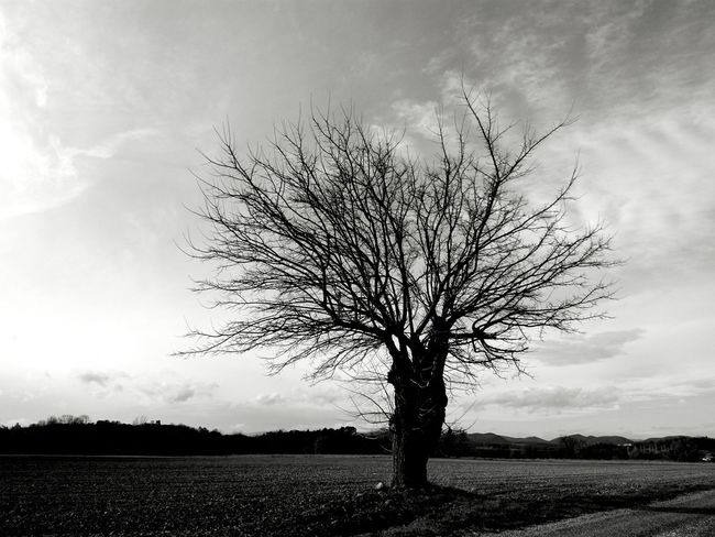 Tree Nature Landscape Tree Trunk No People Branch Beauty In Nature Outdoors Cloud - Sky Day Sky Single Tree Growth B & W Portrait The Week On EyeEm