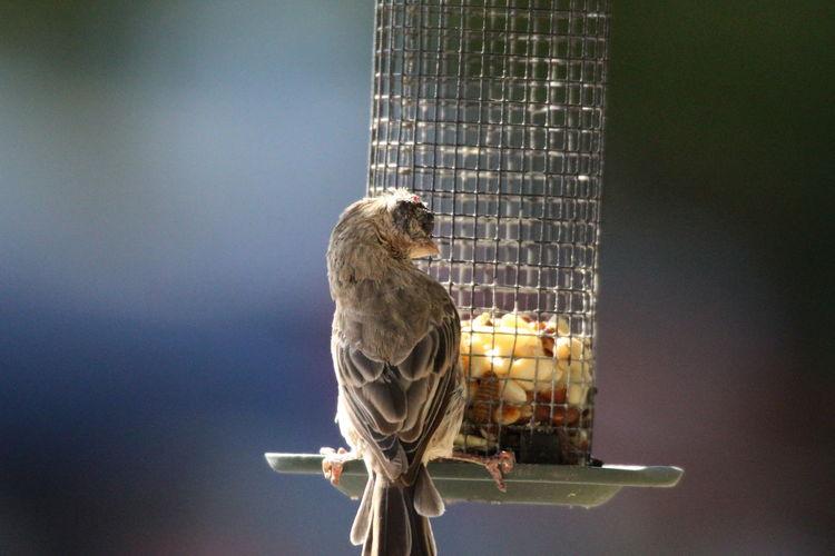 View of bird perching on metal feeder