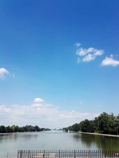 Water Tree Water Flamingo Lake Blue Sky Cloud - Sky