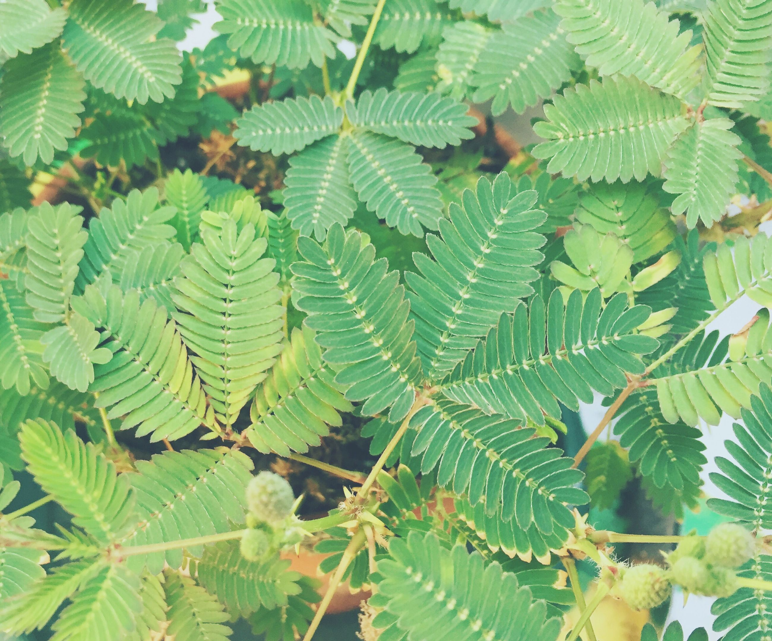leaf, growth, nature, green color, beauty in nature, plant, close-up, no people, fragility, outdoors, tree, day, freshness