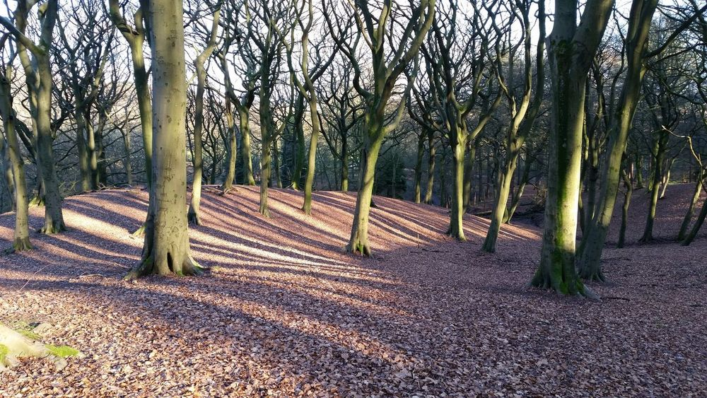 WoodLand Forest Trees Tree Tree Roots  Tree Shadow Tree Shadows Tree Shade Tree Silhouette Sun & Trees Sun Beams Tree Branches Tandlehill Park The Great Outdoors With Adobe