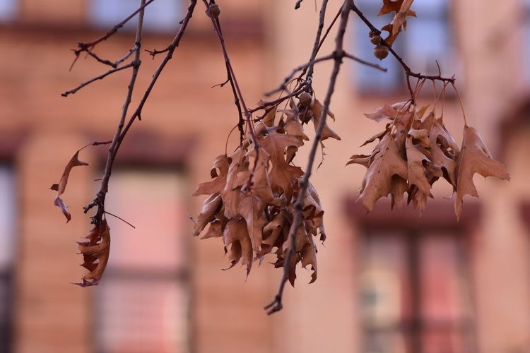 EyeEm Selects Focus On Foreground Day Close-up Outdoors Dried Plant Nature Branch No People Tree Beauty In Nature