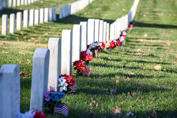 Arlington National Cemetery with Autumn Veterans day Grave Cemetery Plant Grass Flower Tombstone Memorial Flowering Plant Stone Sadness Nature In A Row War Military Selective Focus Honor Fighting Day No People Outdoors Respect Government Arlington National Cemetary Arlington  Autumn