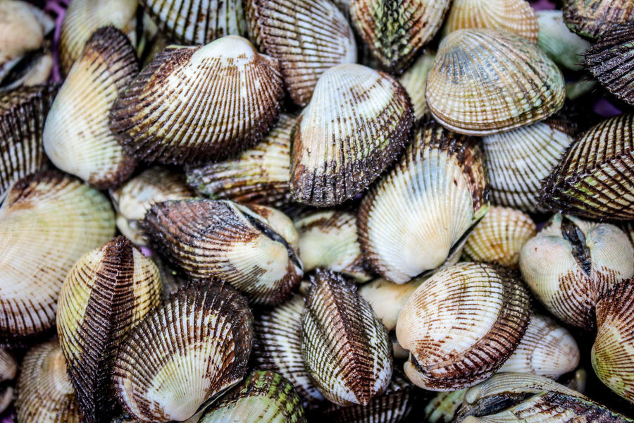 Abundance Animal Shell Animal Themes Backgrounds Close-up Day Food Freshness Full Frame Large Group Of Animals Large Group Of Objects Nature No People Outdoors Sea Life Seafood Seashell Seashell Collection Seashell Seashell, By The Sea Shore Seashells Seashells, Rocks, Sand Seashell❤ Shell Shells Shellsheddyphotography