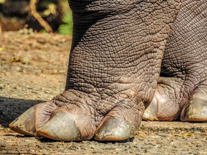 Animal Themes Hippo Hippo Paws Mammal Nails Paws Side View Standing Textured Skin Wildlife Wildlife & Nature Zoology Two Is Better Than One