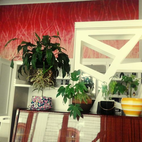 Potted Plant Indoors  Architecture No People Day Plant Flower