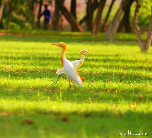 Ek main hu or ek tu 😂 Dove Love Beauty Fromthenature Clickclick Itsphotosensation😎