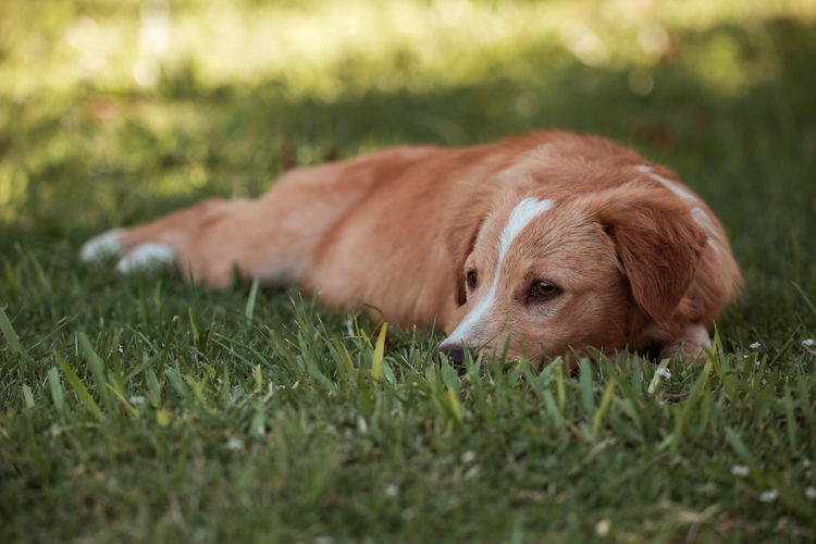 View of a dog lying on grass