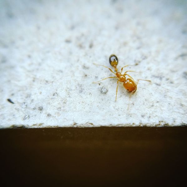 Ant#insect #Withoutzoom#microlens#oneplus3#perfectlighting😍😇😈✌️ Difficult to the shot cuz focus changes as it keeps moving ✌️ my best 😇😈I guess 😁 shotononeplus3 Insect Animal Themes One Animal Tiny Insects Lovewithmicrophotography Oneplus3photography EyeEmNewHere Beauty In Nature Mircophotography Click Click 📷📷📷 Close-up