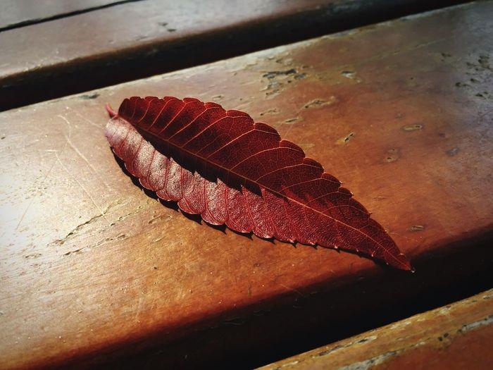 진짜 가을은 낙엽 Leaf Abscission Leaf Leaf Vein Fall Love IPhoneography Landscape Leechangwon Heart Maximum Closeness