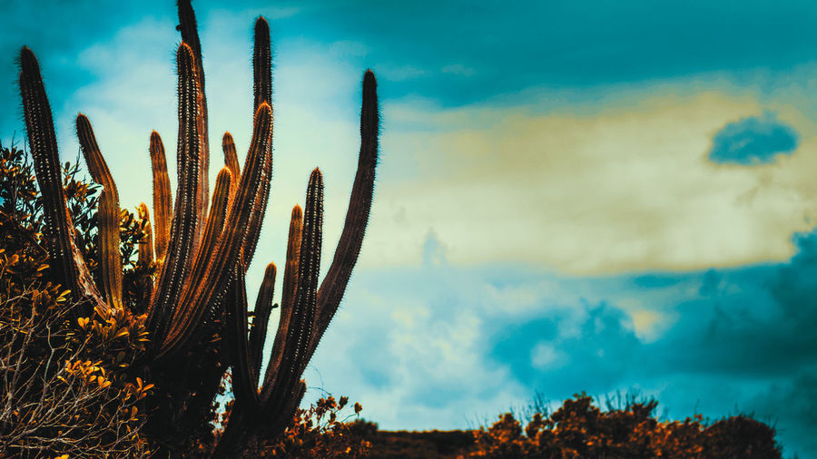 Dessert Sessions 🌵 The Great Outdoors - 2017 EyeEm Awards Warm Colors Color Blockıng Shapes In Nature  Multi Colored Cactus Growth Nature Plant Sky Sunset Saguaro Cactus Cloud - Sky No People Outdoors Wilderness Area Beauty In Nature Day Plants 🌱 Natural Beauty Clear Sky Beauty In Nature Nature Beauty Week On Eyeem