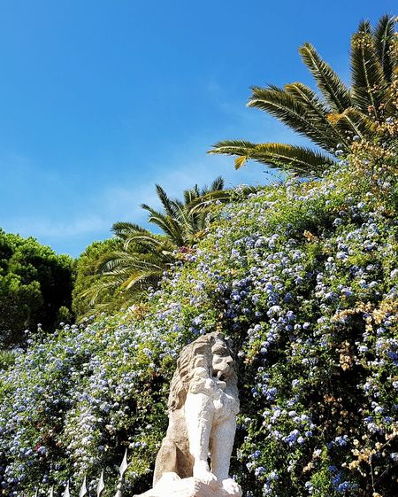 Nature Sky Day Outdoors Growth Tree Low Section Beauty In Nature Close-up Liguria, Italy No People Statue Lion Statue Blue Flowers Antique Villa Entrance Villa Travel Destinations Sunlight