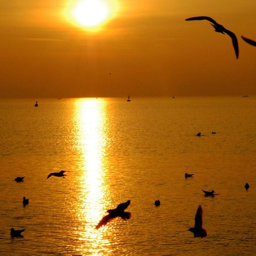 Tramonto Italy❤️ Sirmione Check This Out Hello World Relaxing Taking Photos Colors Travel Photography Spettacolonaturale Paesaggio Ricordi Estate