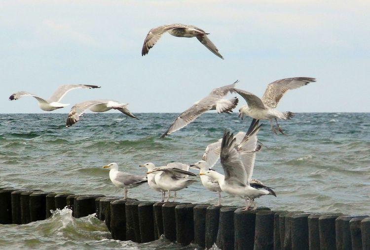 Wasser Urlaub Urlaubsstimmung Urlaub ❤ Welle Wellen Urlaub & Reisen Beach Ocean Meer Strand Sand Börgerende Möven Holiday