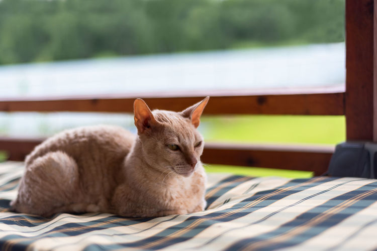 Cat resting on table