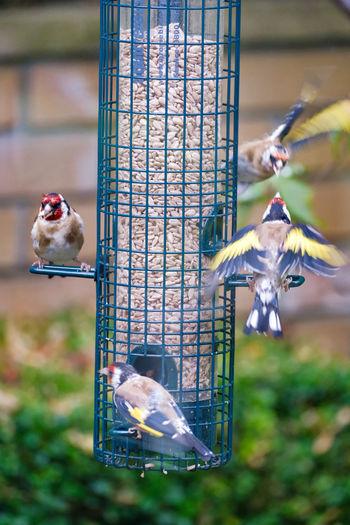 Two birds in a bird feeder
