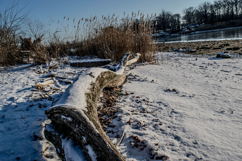 Baltimore Beauty In Nature Cold Temperature Cufotos Day Maryland Nature Nikon Nikonphotography No People Outdoors Scenics Sky Snow Tranquil Scene Tranquility Tree Water Winter