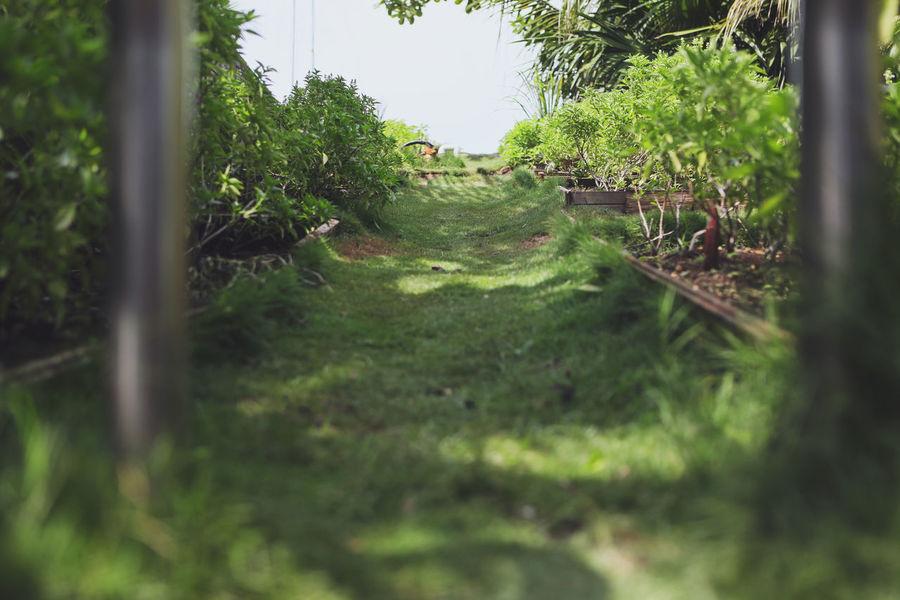 Rooftop Garden Abstract Beauty In Nature Garden Plant The Way Forward Zen