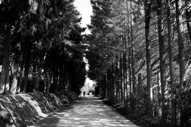 Black And White Portugal Algarve André Pires Santos