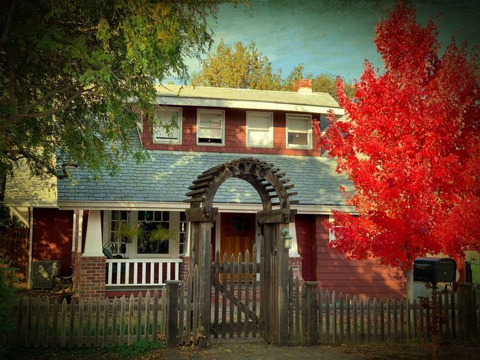 """Autumn Farmhouse"" An old, fully restored, one time farmhouse, sits on a suburban side street adorned in fall color glory, in Northern California. Farmhouse Fall Colors Fall Autumn colors Autumn Suburban Exploration City Streets  Architecture Built Structure Building Exterior Building Tree House Residential District Red"