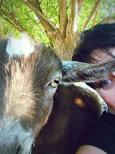 Dramatic Angles Animal Themes One Animal Mammal Animal Head  Close-up Outdoors Livestock Animal Goat Me And Goat IPhoneography Selfie With Goat Interesting Petting Zoo Getting Creative EyeEm Gallery Outdoors Photograpghy