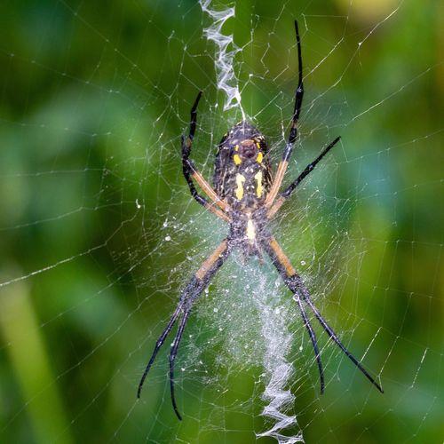 Canon EOS 60D Animal Invertebrate Animal Wildlife Animal Themes Animals In The Wild Arachnid One Animal