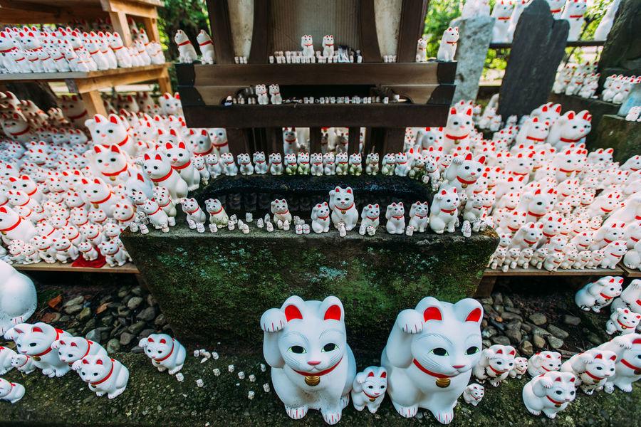 "Gotokuji, the ""cat temple"" in Tokyo. Cat Cat Temple, Doll Gotokuji J Japan Lucky Cat Manekineko Place Of Worship Quirky Religion Religious  Temple Worship"